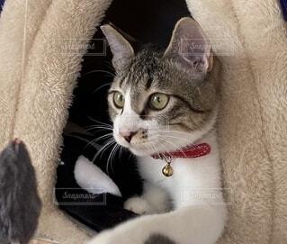 ネズミのおもちゃを見つめる子猫2の写真・画像素材[4181873]
