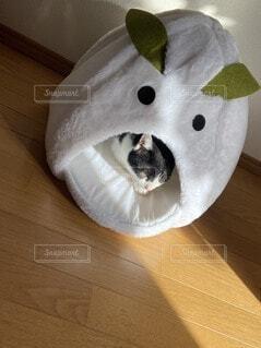 雪うさぎハウスでくつろぐ猫の写真・画像素材[4181885]