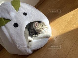 雪うさぎハウスでのんびり猫の写真・画像素材[4181886]