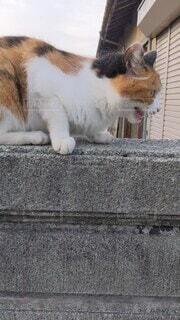 猫,動物,屋外,白,座る,立つ,ネコ科