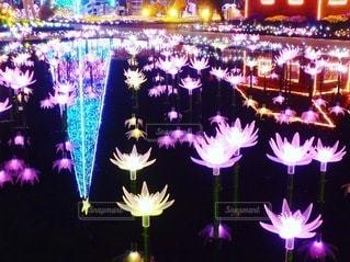 夜に咲く花の写真・画像素材[3610459]