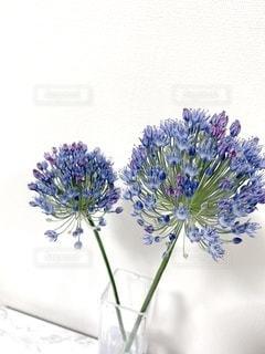 咲きましたの写真・画像素材[3610710]