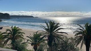 ヤシの木のあるビーチの写真・画像素材[3788103]