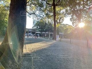 朝日,神社,樹木,正月,お正月,初詣,日の出,新年,初日の出