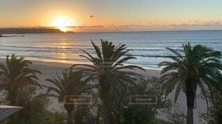 自然,海,空,屋外,太陽,朝日,ビーチ,波,水面,海岸,樹木,正月,ヤシの木,お正月,日の出,新年,初日の出