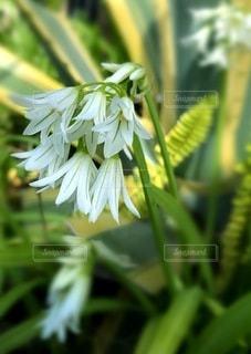 花のクローズアップの写真・画像素材[3633209]