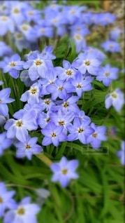 花のクローズアップの写真・画像素材[3633321]