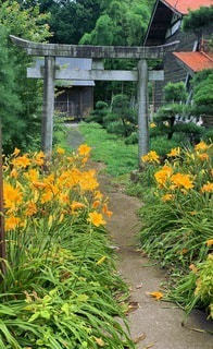 オレンジ色の花のグループの写真・画像素材[3642913]