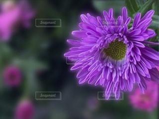 花のクローズアップの写真・画像素材[3643278]