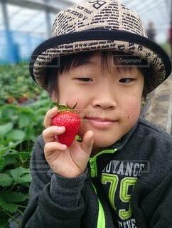 子ども,食べ物,赤,手持ち,果物,人物,人,ポートレート,ライフスタイル,手元,イチゴ