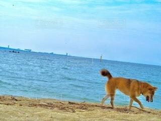 砂浜で遊ぶ愛犬の写真・画像素材[3616927]
