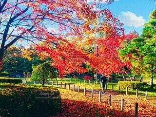 朝の公園を散歩の写真・画像素材[3726592]