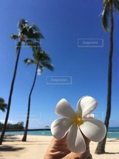 空,花,青い空,手持ち,人物,ハワイ,Hawaii,ポートレート,ライフスタイル,プルメリア,手元
