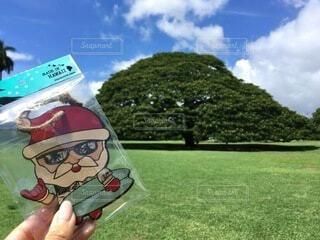 手持ち,人物,ハワイ,Hawaii,ポートレート,この木なんの木,ライフスタイル,手元,日立の木,モアナルアガーデン
