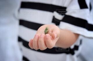 小さなカエルを持つ小さな手の写真・画像素材[3688807]