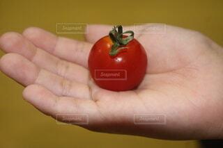 食べ物,赤,手,果物,トマト,野菜,人,食品,食材,フレッシュ,ベジタブル,チェリートマト,自然食品,プラムトマト,ブッシュトマト