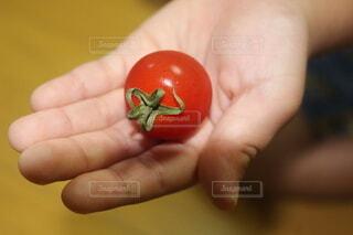 屋内,赤,手,手持ち,トマト,野菜,人物,人,ポートレート,ライフスタイル,手元