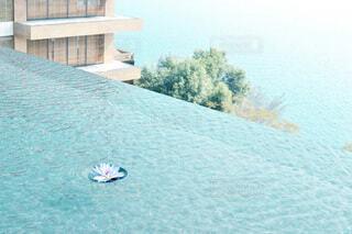キラキラの水面に浮かぶ一輪の蓮の写真・画像素材[4750539]