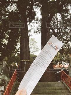 自然,木,屋外,神社,手持ち,人物,ポートレート,おみくじ,ライフスタイル,手元