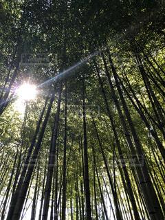 竹林のかけっこ^_^の写真・画像素材[3698334]