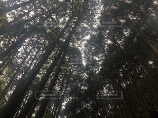 自然の傘の写真・画像素材[3711733]