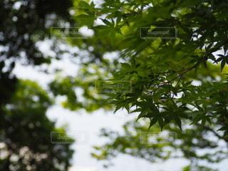 木のクローズアップの写真・画像素材[3644364]