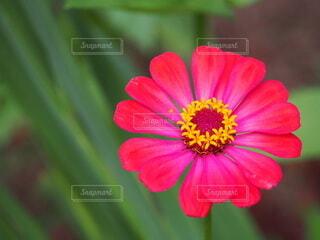花のクローズアップの写真・画像素材[3644452]