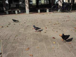 公園にいた鳩の写真・画像素材[3659171]