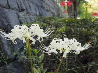 花のクローズアップの写真・画像素材[3725293]