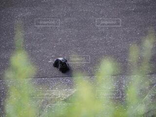 堤防の外に寝転がる黒猫の写真・画像素材[3729834]