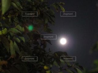 林の中にのぞく月の写真・画像素材[3740329]