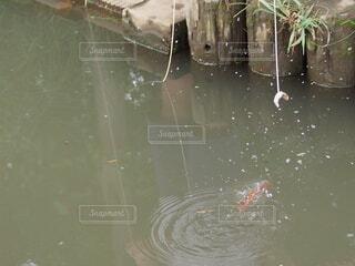 ザリガニ釣りですの写真・画像素材[3746200]