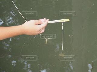 水の中でえさを抱いているザリガニの写真・画像素材[3746199]