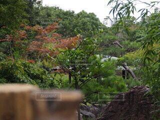 公園の庭にある紅葉の写真・画像素材[3794093]