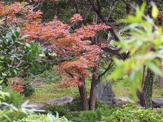 庭園の紅葉の写真・画像素材[3803622]