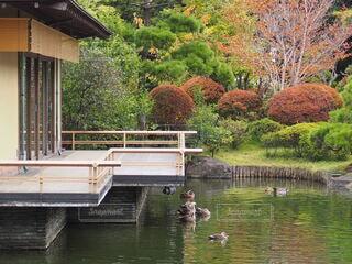 庭園の池と紅葉の写真・画像素材[3862809]