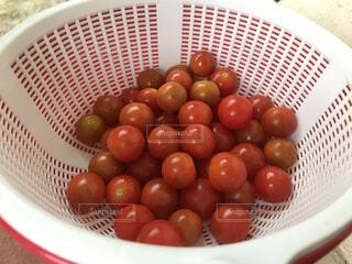 食べ物,野菜,食品,プチトマト,食材,フレッシュ,ベジタブル,収穫直後