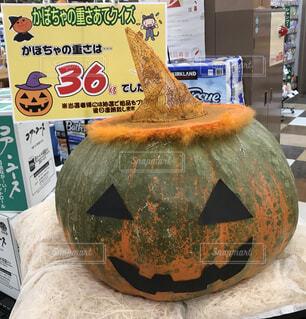 ハロウィンのかぼちゃ、36㎏の写真・画像素材[3814113]