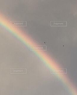 虹と鳥の写真・画像素材[4432402]