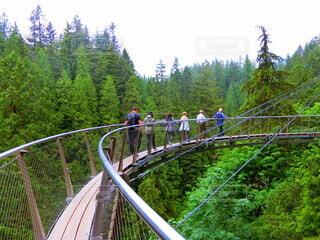 森に架かる橋の写真・画像素材[3658550]