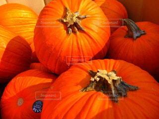 Season for pumpkinの写真・画像素材[3696635]