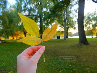 木漏れ日の秋の写真・画像素材[3696766]