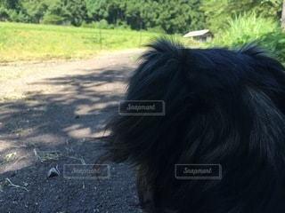 先を見つめる犬の後ろ姿の写真・画像素材[3637665]
