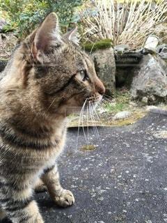 猫の横顔の写真・画像素材[3639680]