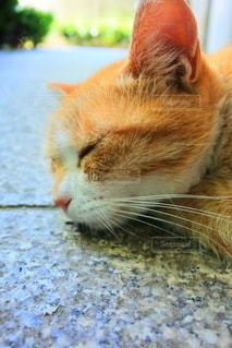 猫のクローズアップの写真・画像素材[3638232]