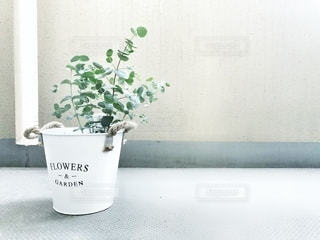 ベランダの植木鉢の写真・画像素材[3640437]