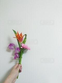 花,ピンク,赤,花束,爽やか,手持ち,人物,ポートレート,カーネーション,ライフスタイル,ひとり暮らし,草木,スイートピー,手元
