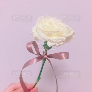 花,屋内,白,バラ,結婚式,お花,手持ち,薔薇,人物,リボン,ポートレート,ライフスタイル,草木,手元