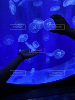 青,水族館,手持ち,涼しい,人物,ポートレート,クラゲ,ライフスタイル,手元,つかむ