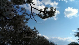 空,花,桜,季節,風,香り,桜見,春風